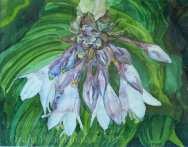 Lilac Apparition £30