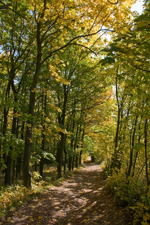 Branch Path Trail In The Forest Autumn Tunnel